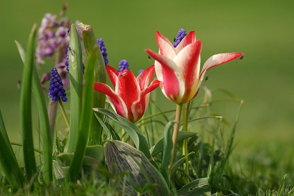 Frühling Frühlingserwachen