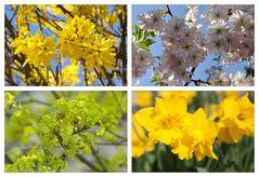 Frühling - Für Anne