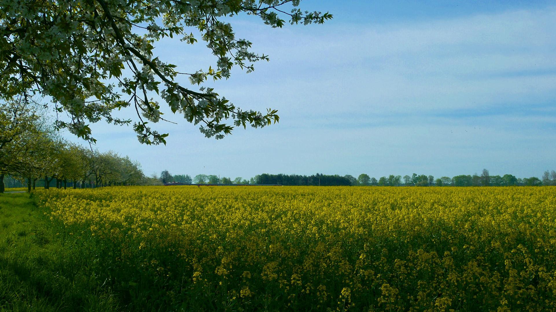 ...Frühling genießen...