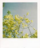 Frühling hinterm Haus