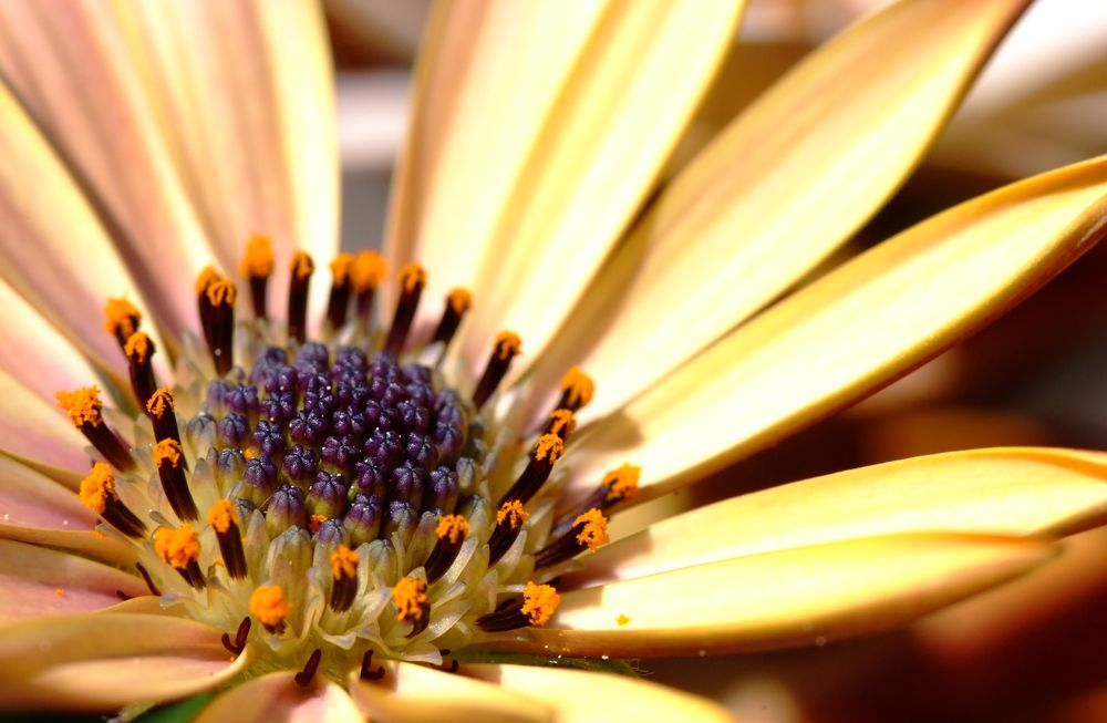 daisy aus mario nackt