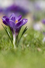 Frühling -II-