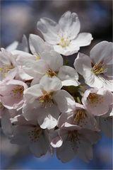 Frühling II
