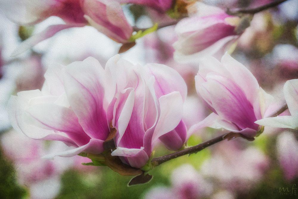 Frühling III