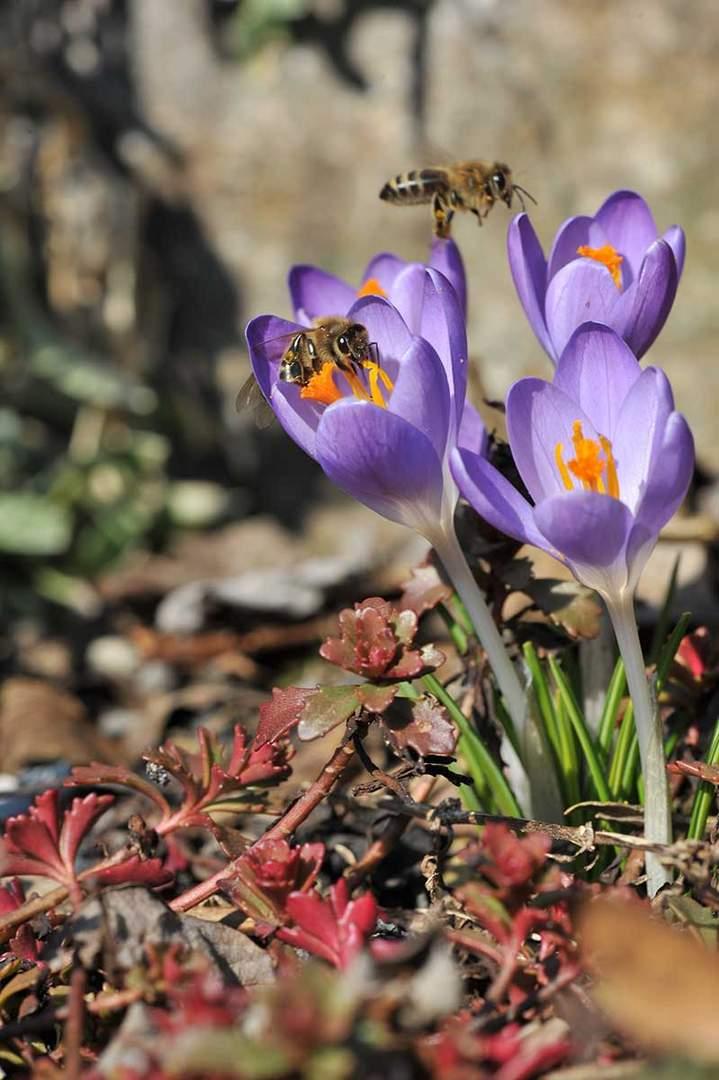 Frühling im Anflug