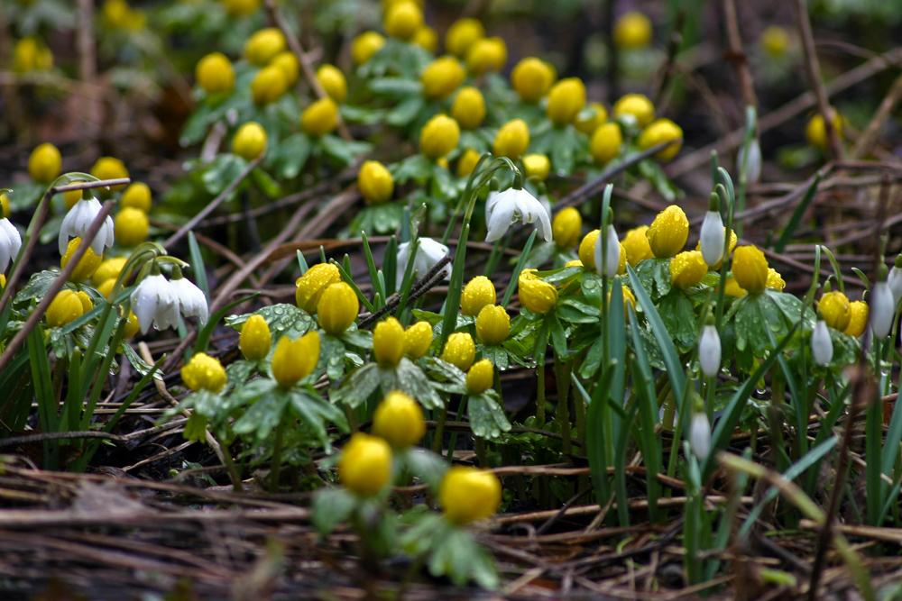 Frühling im Anmarsch