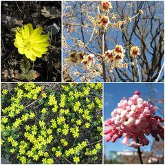 Frühling im bot. Garten Dresden