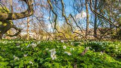 Frühling im Botanischen Garten Bonn
