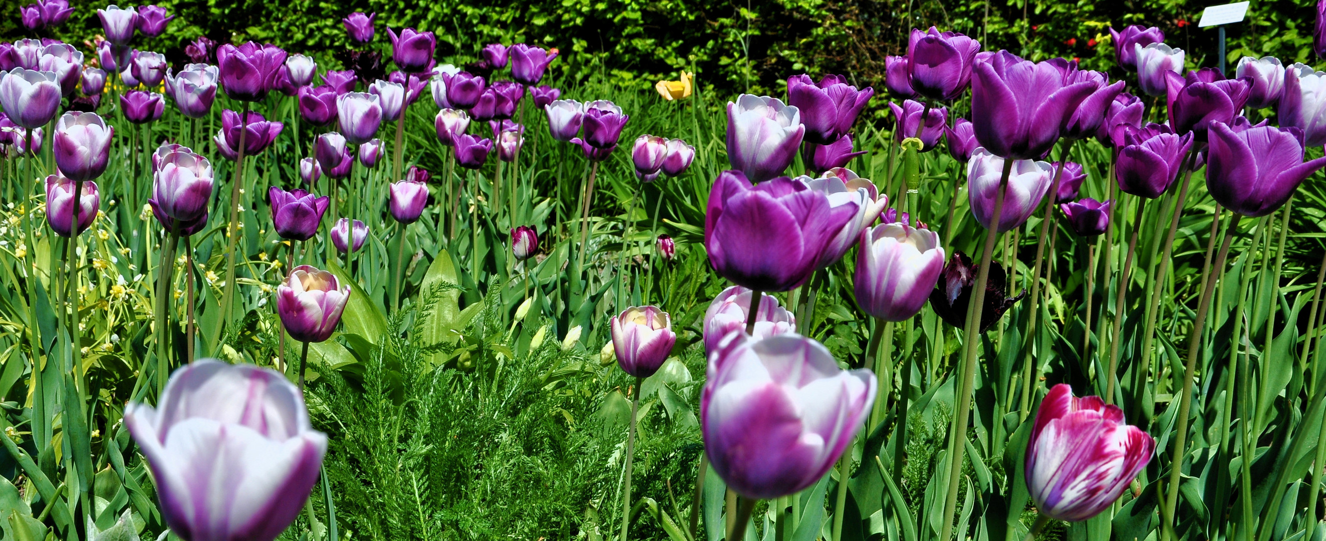 Frühling im Botanischen-Garten Chemnitz 2011.....