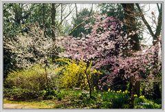 Frühling im Bunten Garten in Mönchengladbach