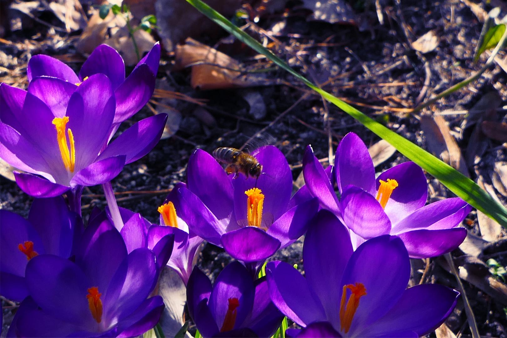Frühling im Februar 2019