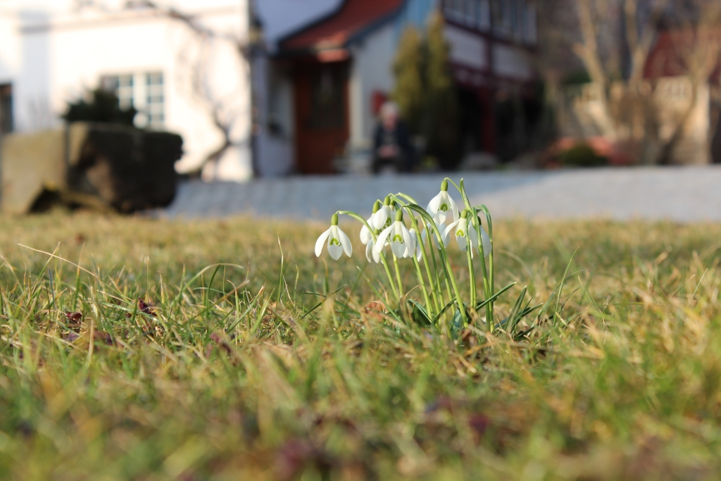 Frühling im Fokus