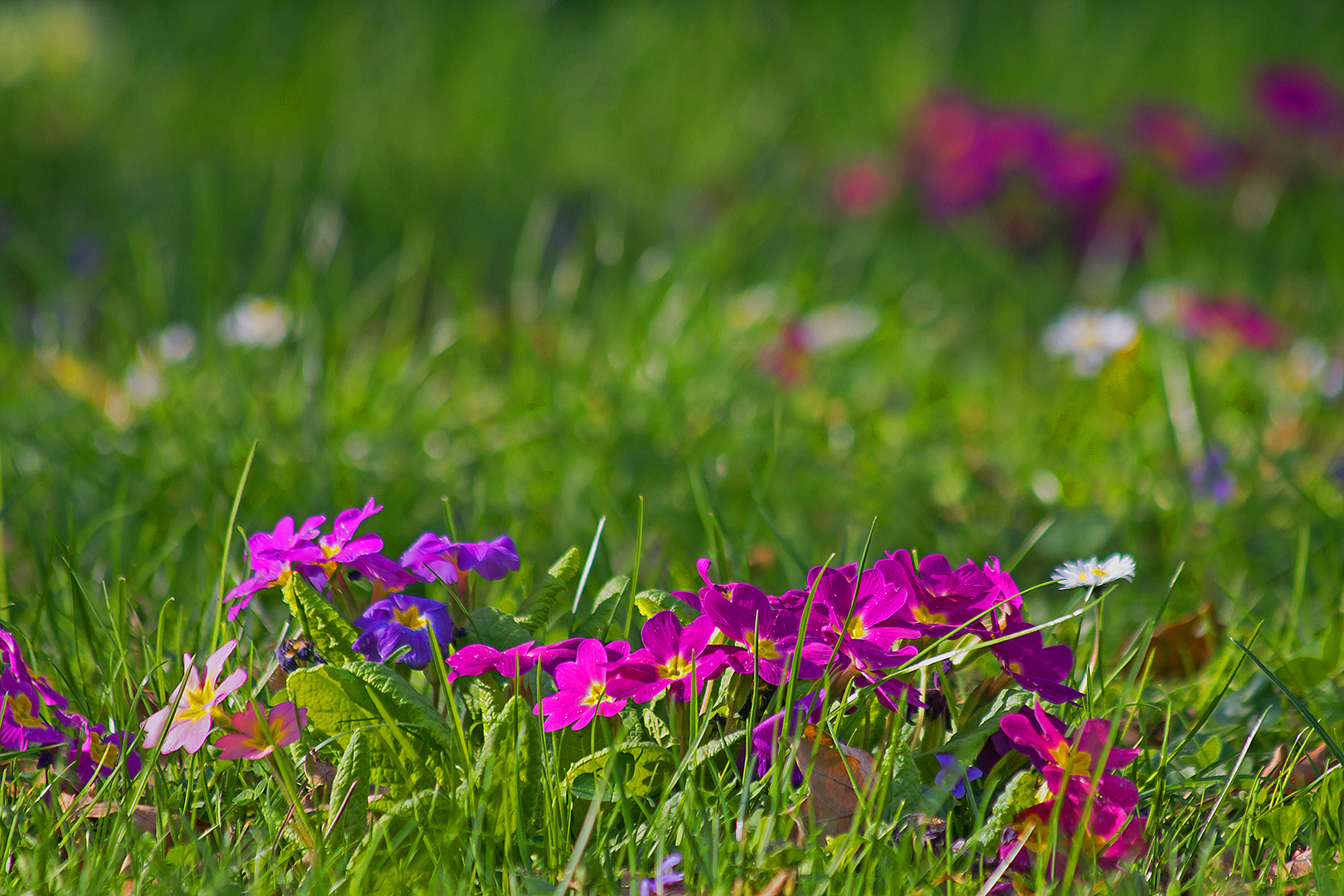 Frühling im Hof