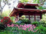 Frühling im japanischen Garten in Leverkusen 3