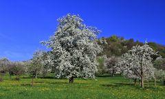 Frühling im Ländle