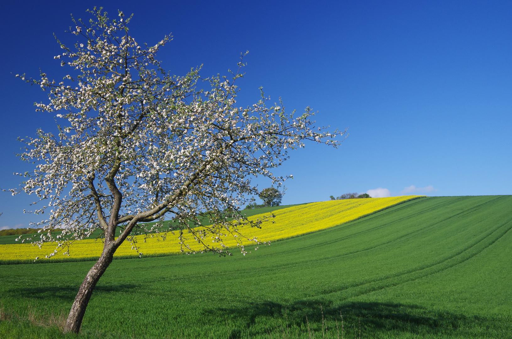 Frühling im Land!