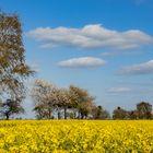 Frühling im Lipperland 002