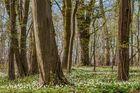 *Fruehling im Lohrsdorfer Wald*