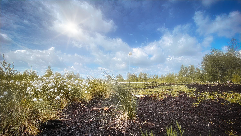 Frühling im Moor