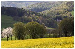Frühling im Naturpark Solling-Vogler - oder: ...das versteckte Haus...