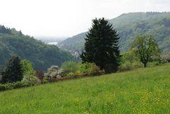 Frühling im Neckartal