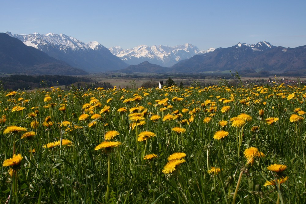 Frühling im Oberland