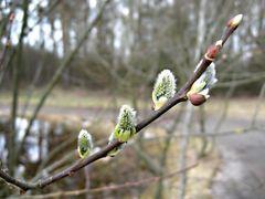 Frühling im Park 1