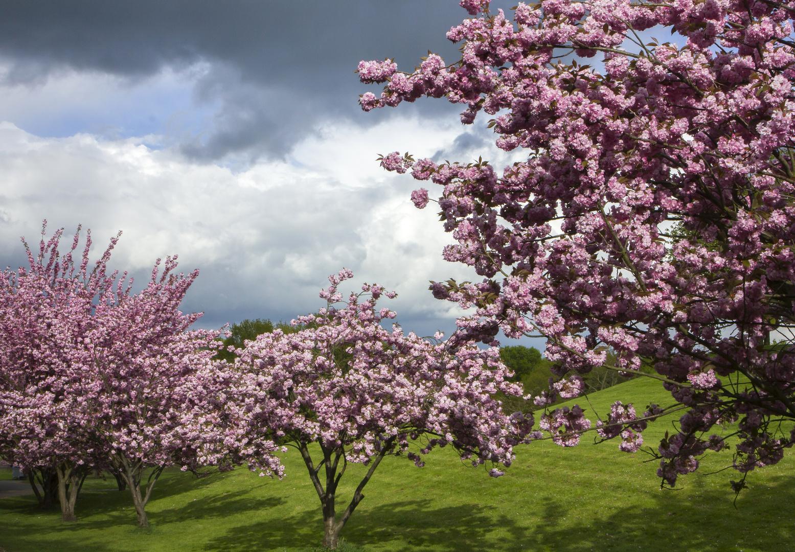 Frühling im Park Foto & Bild | pflanzen, pilze & flechten, bäume ...