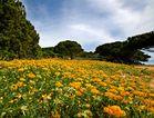 Frühling im Pinienwald