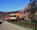 Frühling im / Primavera en / Printemps au = Tessin...02