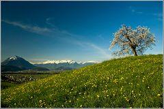 Frühling im Rheintal . . .