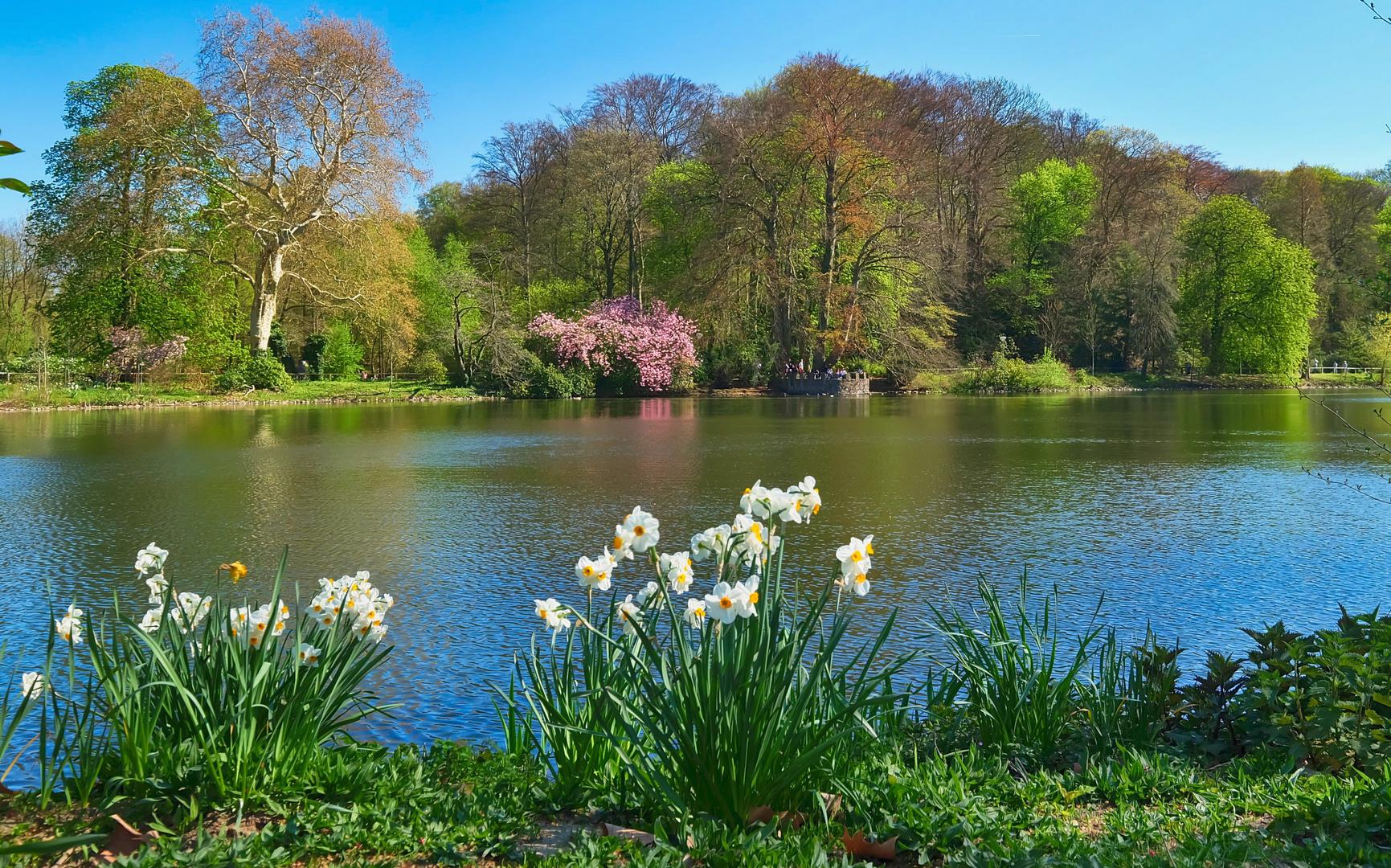 Frühling im Rombergpark