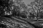 Frühling im Rosensteinpark