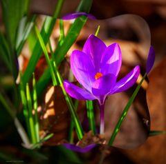 Frühling im Schlosspark Dyck