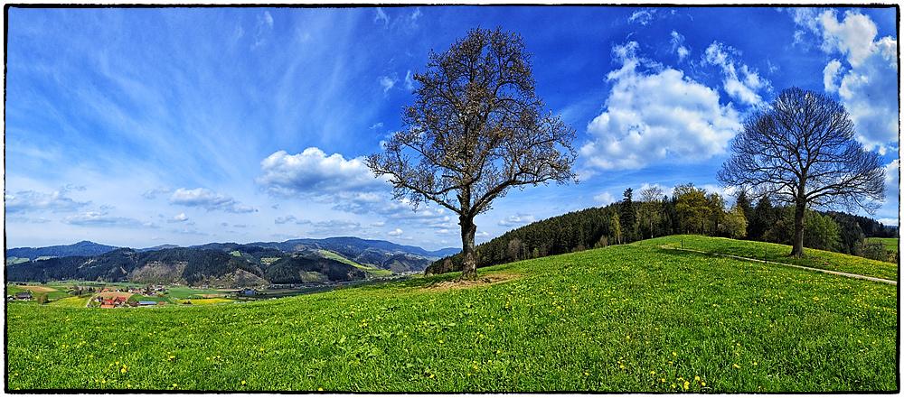 Frühling im Schwarzwald
