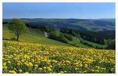 Frühling im Siegerland - Rothaarsteig