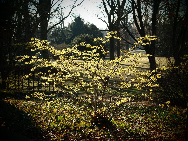 Frühling im Stadtpark