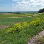 Frühling im Steigerwald