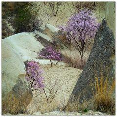 Frühling im Tal von Göreme