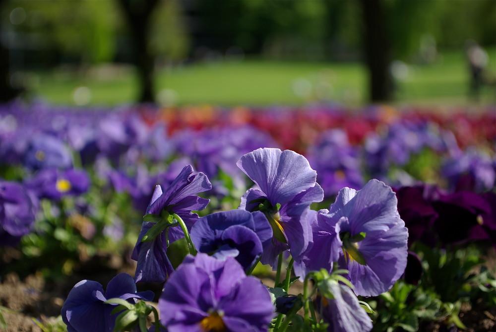 Frühling im Volkspark Mainz