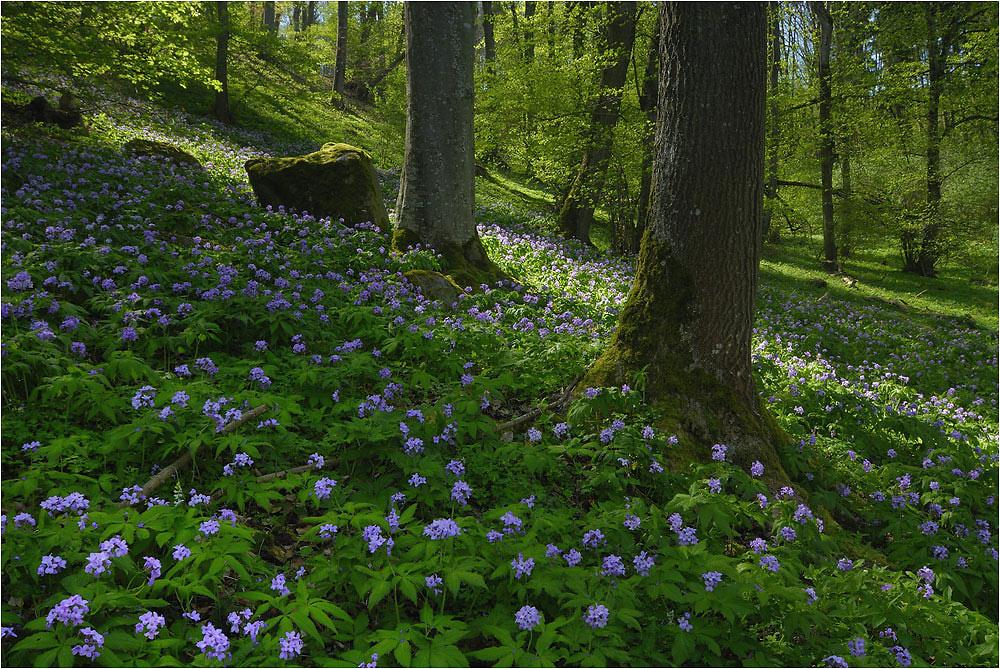 fr hling im wald foto bild pflanzen pilze flechten bl ten kleinpflanzen wildpflanzen