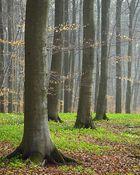 Fruehling im Wald