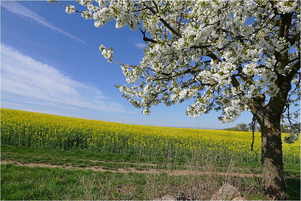 Frühling im Weinviertel ~16.02~