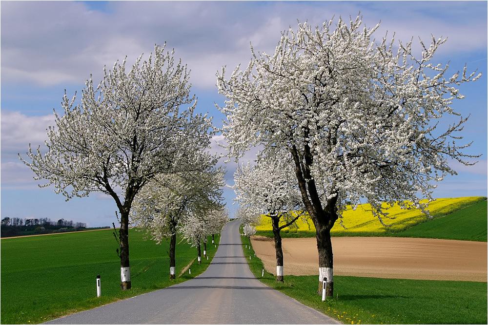 Frühling im Weinviertel ~16.04~