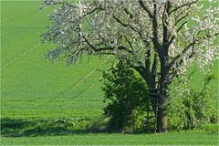 Frühling im Weinviertel ~16.06~