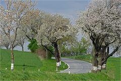 Frühling im Weinviertel ~16.07~
