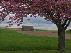 Frühling im Weinviertel ~16.16~