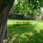 Frühling im Westfalenpark