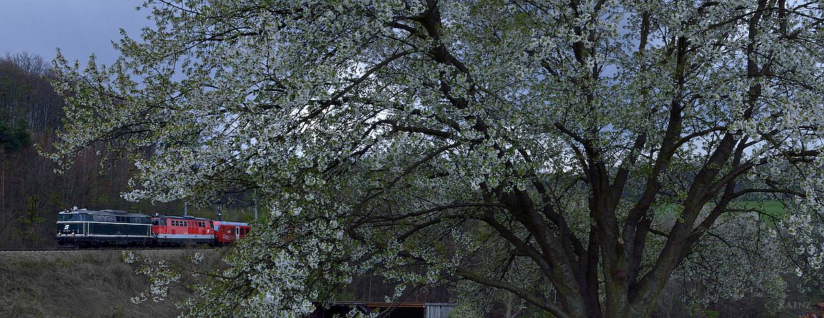 Frühling im Wienerwald IV