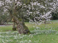 Frühling im WINTER